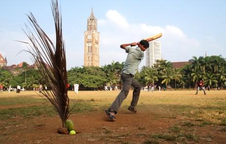 Palm branch as stump, Oval Maidan Mumbai ┬® Emma Levine 2010